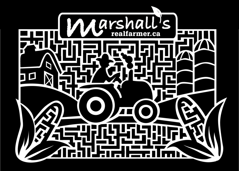 Marshalls-corn-maze